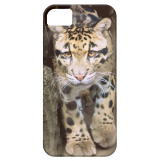 Clouded Leopard iPhone 5 Covers