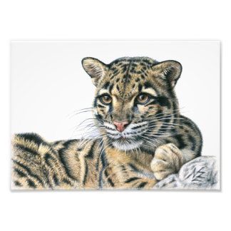 Clouded leopard - Nebelparder Photo Print