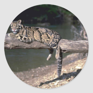 Clouded leopard on log round sticker