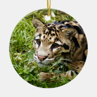 clouded leopard waiting for mom and love ceramic ornament