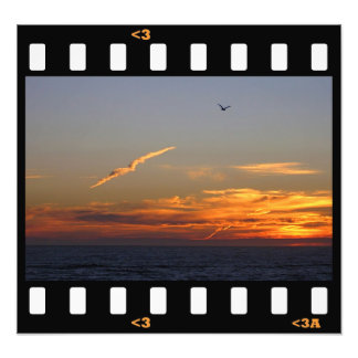 clouds- gull art photo
