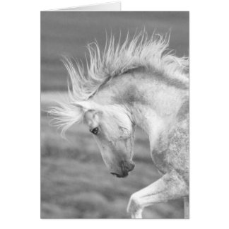 Cloud's Pride Wild Horse Greeting Card