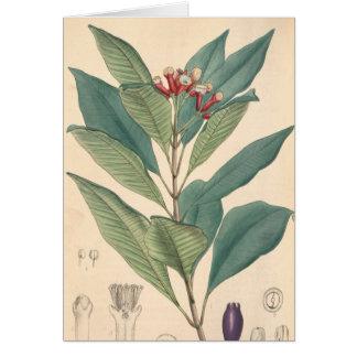 Clove Card