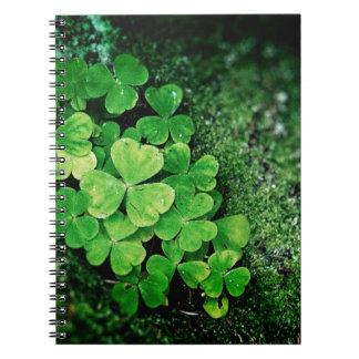 clover patch on moss journal