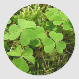 Clover patch - stickers