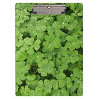 Clover shamrock green nature clipboard