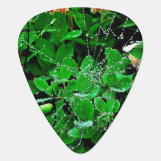 Clover Web Dew ,Groverallman Guitar Pick