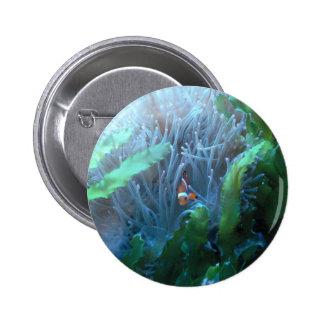 Clown Fish 2 Inch Round Button