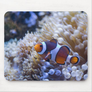 CLOWN FISH by Michelle Diehl Mouse Pad