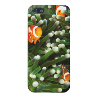 Clown Fish in the Coral Garden of Sipadan Case For The iPhone 5