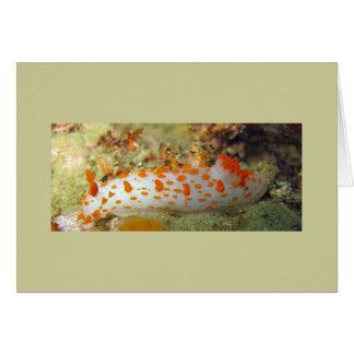 Clown Nudibranch Card