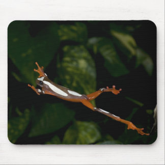 Clown Treefrog, Hyla leucophylatta, Native to Mouse Pad