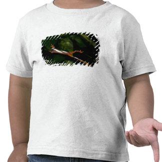 Clown Treefrog, Hyla leucophylatta, Native to T-shirts