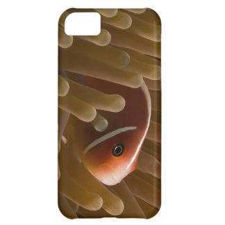 Clownfish Coral Sea Great Barrier Reef Case For iPhone 5C