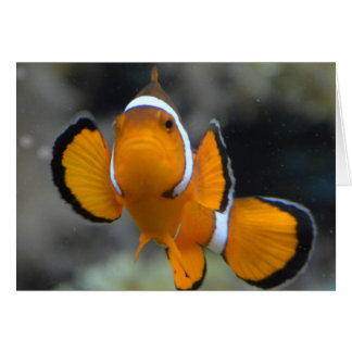 clownfish facing front card