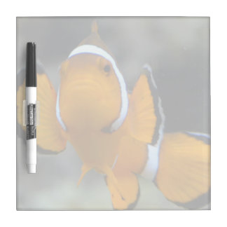 clownfish facing front dry erase board
