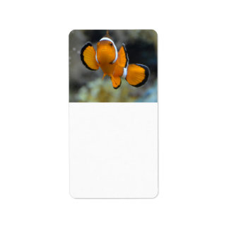 clownfish facing front label