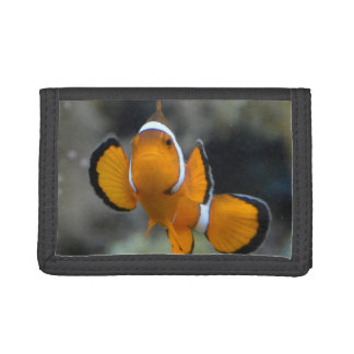 clownfish facing front trifold wallets