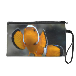 clownfish facing front wristlet