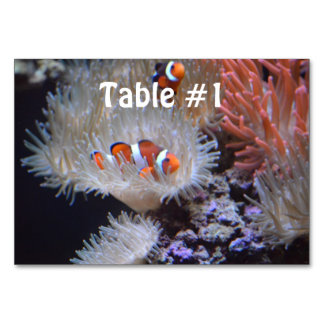 Clownfish Table Card
