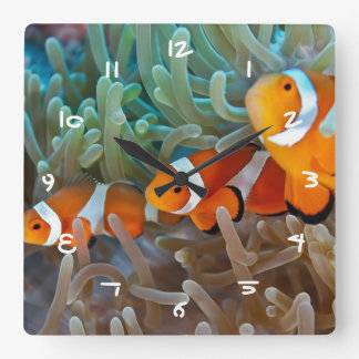 Clownfish Wallclocks