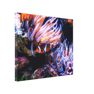 Clownfishes Habitat Canvas Print