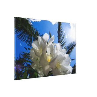 Cluster Of White Tropical Flowers Canvas Print