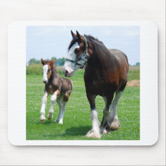 Clydesdale and Filly Mouse Pad