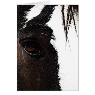 Clydesdale Card