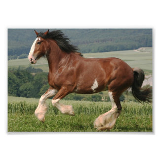 Clydesdale Horse Photo Print
