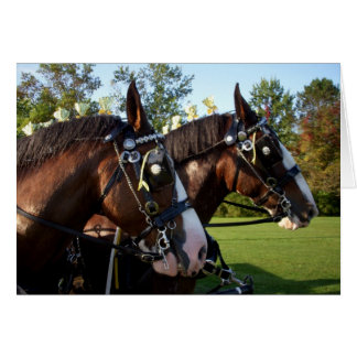 Clydesdale Horses Card