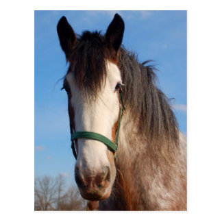 clydesdale mare postcard