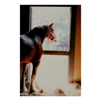 Clydesdale Poster