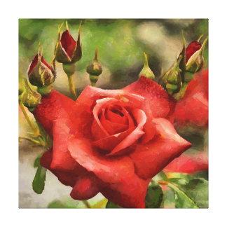 CM12205 - Rose loves all Canvas Print