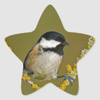 Coal Tit Bird Resting Star Sticker