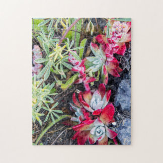 Coast Dudleya At Point Reyes National Seashore Jigsaw Puzzle