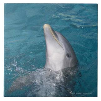 Coastal Bottlenose Dolphin Tile