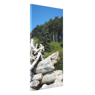 Coastal Driftwood and Windswept Trees Canvas Print