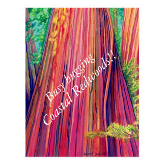 Coastal Redwoods Postcard
