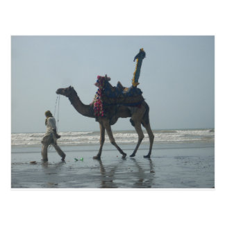 Coastal tribal Camel.JPG Postcard