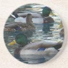 Coaster - Duck, Duck, Duck, Duck