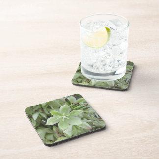 Coasters - Hard Plastic - Yucca Flower