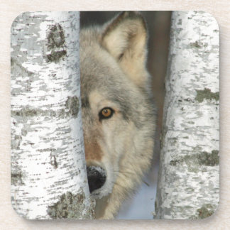 coasters with photo of gray wolf in birch trees