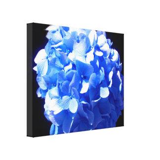 Cobalt Blue Hydrangea Canvas Print