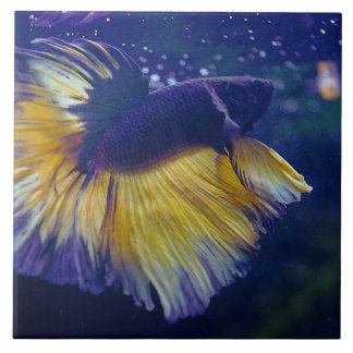 Cobalt Male Betta Large Ceramic Photo Tile