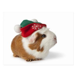Cobaye mignon avec le chapeau de Noël sur le blanc Cartes Postales