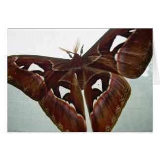 Cobra Moth Card