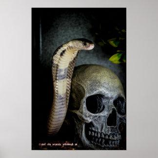 Cobra with skull poster
