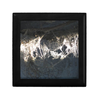 Cobweb or spider web illuminated by the sunshine jewelry box