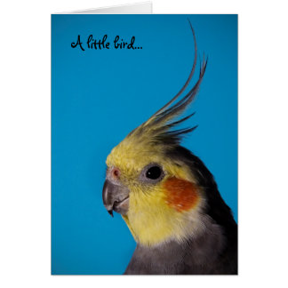 Cockatiel, A little bird... Card
